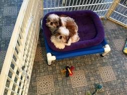 extra small dog bed cat bed 15