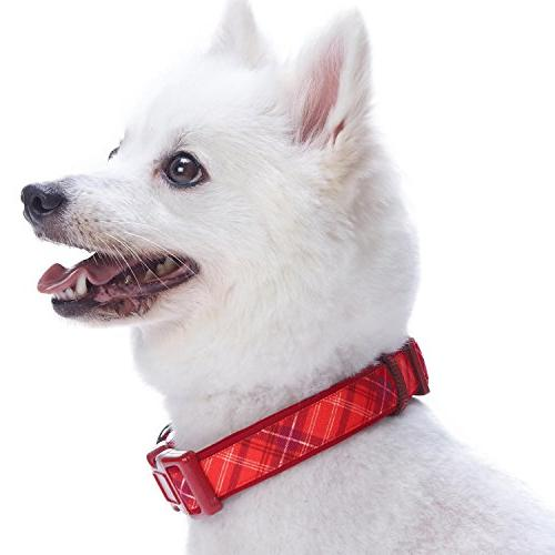 Blueberry Soft Aileen Style Designer Dog Collar, Neck Adjustable for Dogs