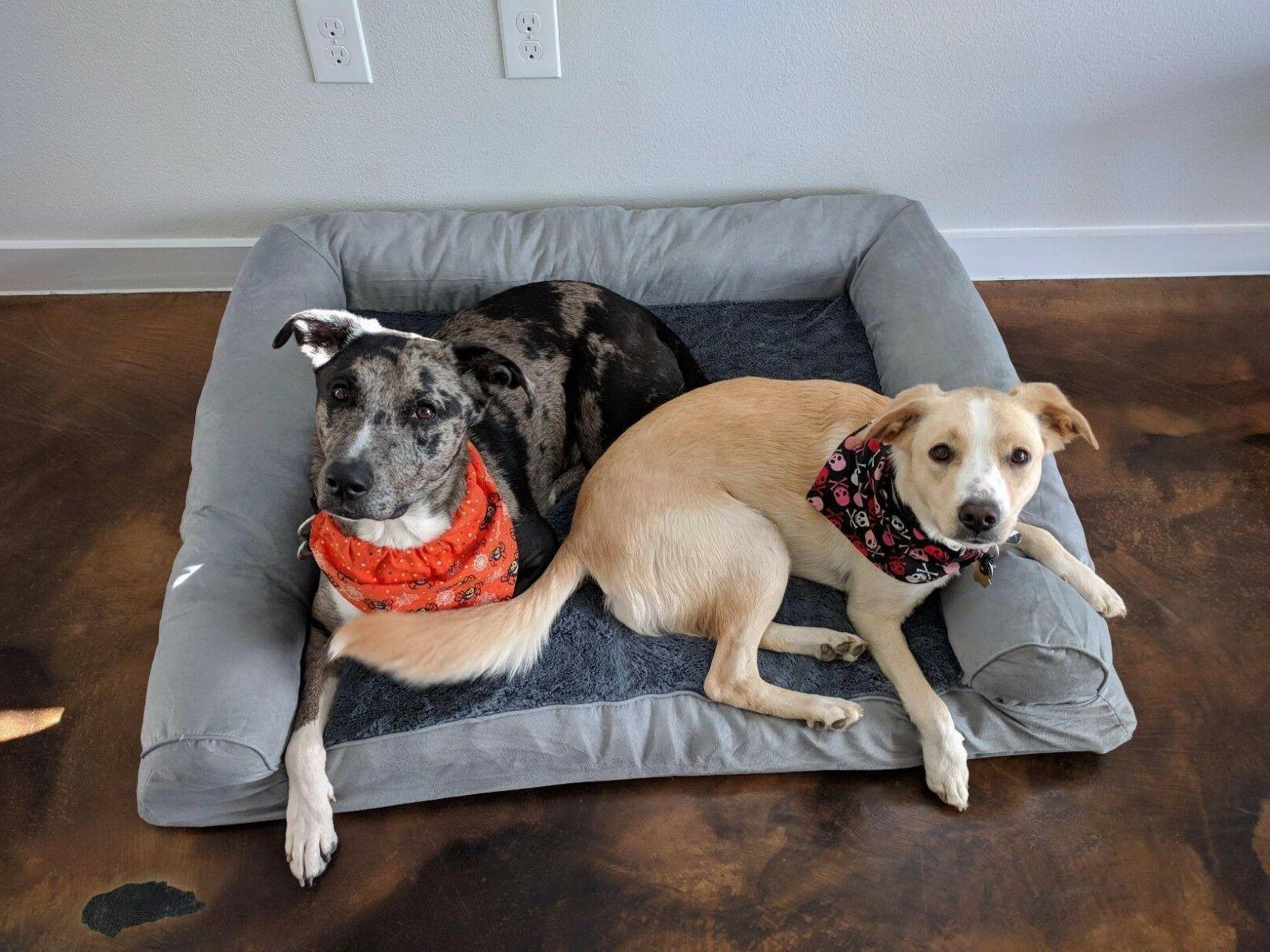 Extra Great Dog Bed Big Pet XL