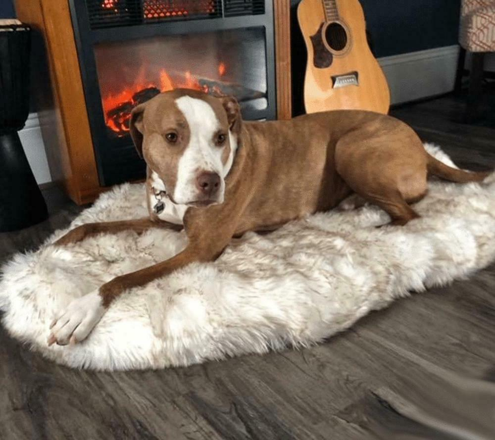 Faux Fur Orthopedic Bed Soft And Plush Cover