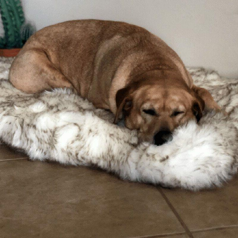 Faux Orthopedic Bed Support Cover