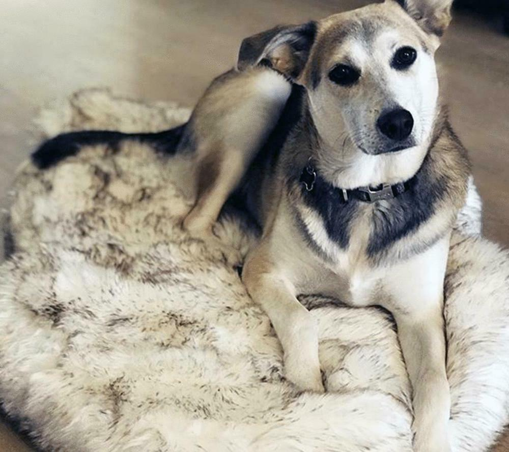 Faux Dog Bed Support And Memory Cover