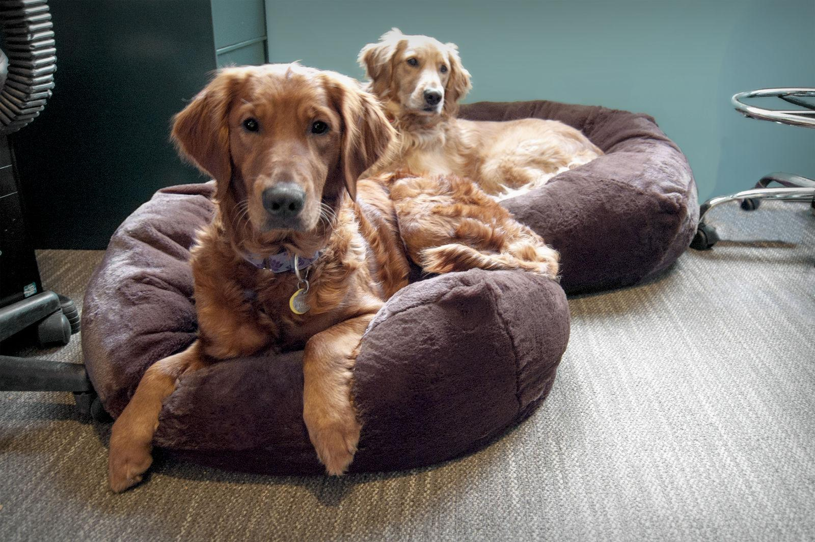 FurHaven Ball Dog Bed