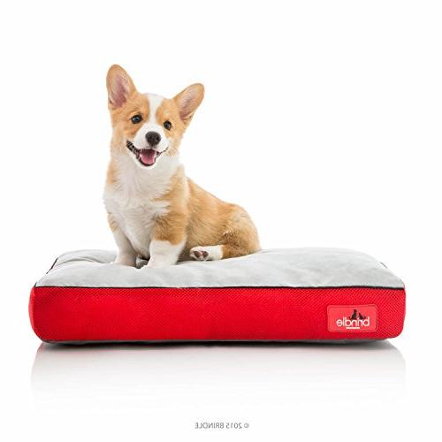 soft cozy memory foam dog